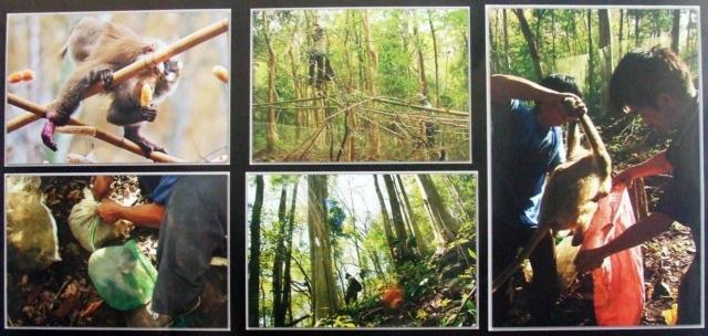 các bức ảnh trong Tàn sát loài khỉ