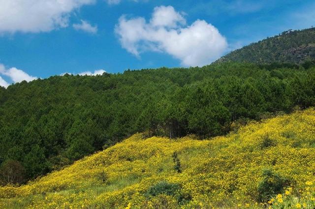 Hoa dã quỳ- ảnh Tuan_coi(phuot.vn)
