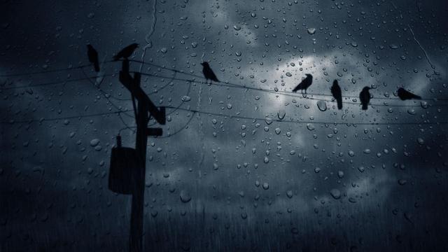 rain-wallpaper-3