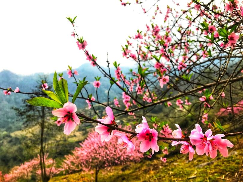 6. Sắc hoa làm người ta xao xuyến