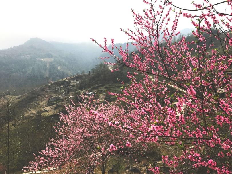 Hinh 9_Mùa xuân ở Hà Giang