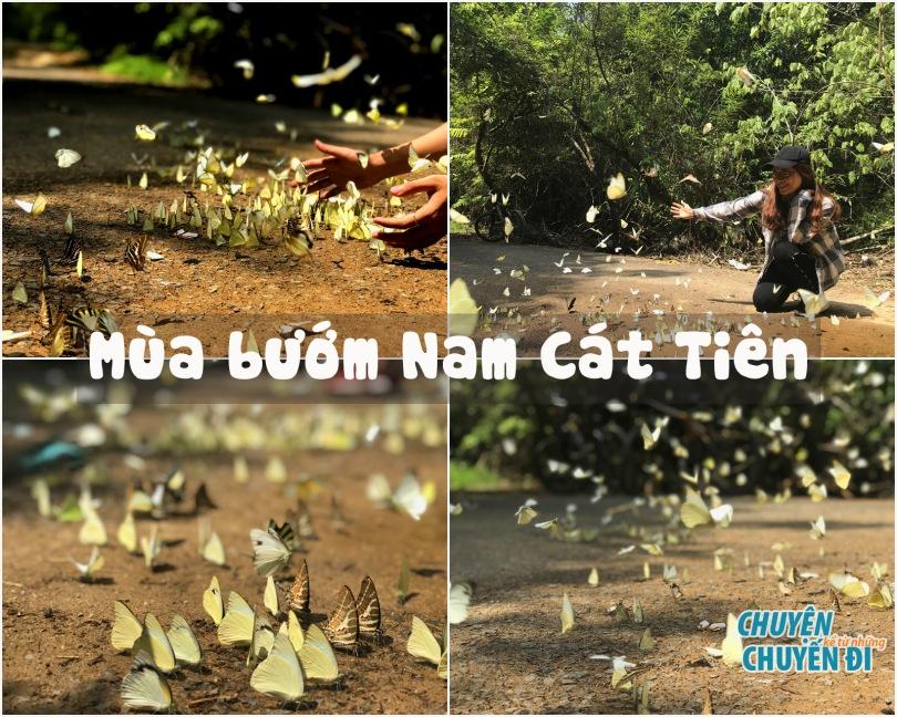 Mùa bướm ở VQG Nam Cát Tiên
